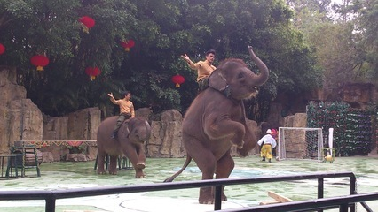 2017中国十大人气动物园排行榜,长隆野生动物世界第一