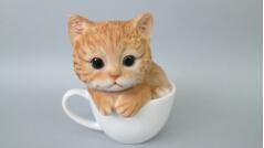 世界上最小的猫排行榜 8大最小型猫品种