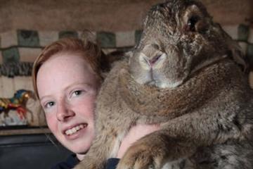 世界上最重的兔子:拉尔夫