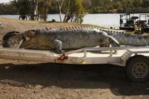 世界上最大的鳄鱼:长6.4米 重1075公斤(图)