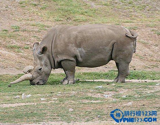 盘点近年灭绝的十大珍稀动物
