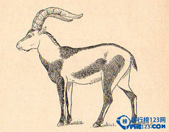 在所有灭绝的动物中,比利牛斯山羊的绝迹可谓是最特别的了,因为它是第一个通过克隆又复活的物种。最后一只自然生育的比利牛斯山羊死于2000年1月6日。生物学家利用它的皮肤细胞克隆了一只新山羊,但是因为肺功能衰弱而仅存活了7分钟。灭绝的原因:过度狩猎造成比利牛斯山羊的数量急剧减少,自然资源保护主义者责怪西班牙政府未能及时采取行动来挽救它们。 6.
