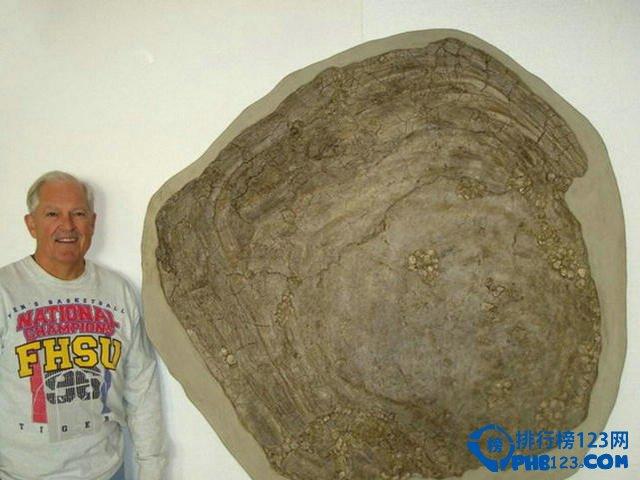 platinus是迄今发现地球历史上最大的双壳类生物之