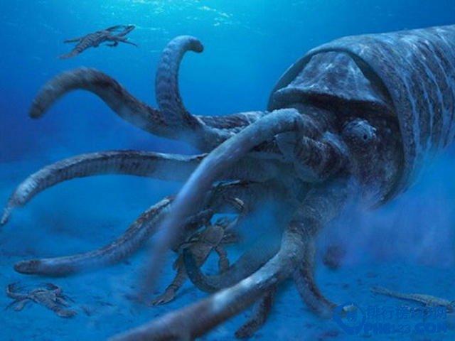 从房角石残骸化石可判断其体长达到9米,它可能是古生物时期体型最大的海洋掠食性物种,它们在海水中寻觅食物,并伏击猎物。古生物学家分析称,它基本上是盲视生物,像现代近亲物种鹦鹉螺一样是海洋漂浮者。 鲜为人知的十大远古超级生物之五:陆地杀手蝎