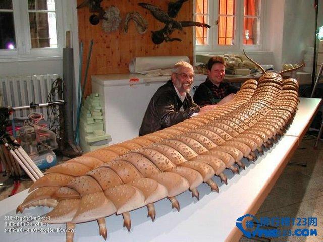 远古蜈蚣虫是蜈蚣和千足虫的祖先物种,其体长可超过2.4米,是一种身体肥硕的远古生物,也是迄今发现为数不多的无脊椎掠食性生物。它们生活在石炭纪至二叠纪早期,大约3亿年前,栖息在现今北美洲和苏格兰境内。 鲜为人知的十大远古超级生物之二:巨蛤