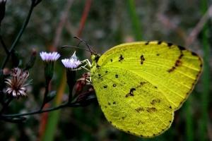 盘点自然界十大奇特罕见的黄色动物