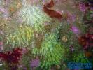 十大最美丽奇特的海洋生物排行榜