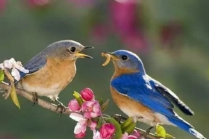 世界上十大最忠贞爱情鸟