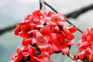 盘点十大鲜花的养生功效 鲜花的养生功效介绍