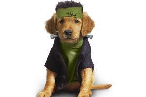狗的平均寿命排行榜,忠心护主的藏獒最长寿(20岁)