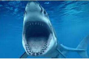 十大最危险的海洋动物,危机重重杀人无数