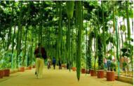 世界上最长的丝瓜:长4米(相当于两个姚明长)
