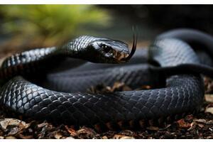 世界上攻击性最强的蛇排行榜,黑曼巴暴躁毒性强