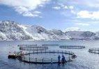 世界上最大的深海养殖场,挪威超级渔场20多层楼高(中国制造)