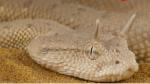彩虹蛇五头蛇食蜗牛蛇,盘点世界上最奇怪的蛇排行榜