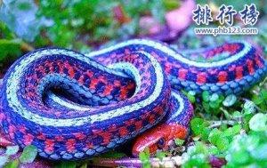 世界上最奇异的蛇:香蛇,能发出香气,防蚊