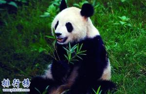 最稀有的十大动物,第一全世界甚至只有35只。