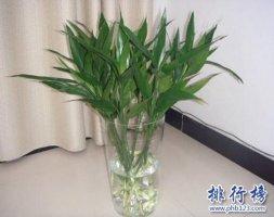 十种办公室适合养的植物,第一种可招财!