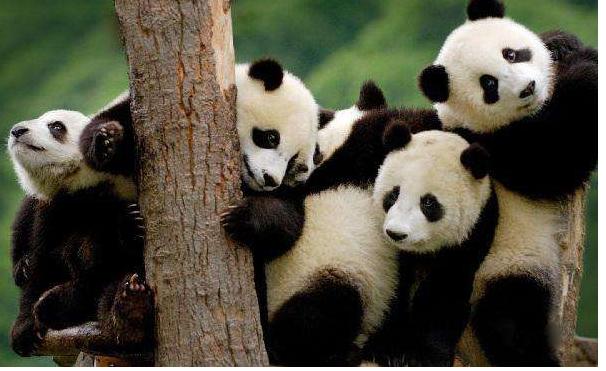中国十大国宝动物,盘点我国最珍贵的濒危动物