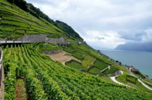 世界十大酒庄排行榜:瑞士拉沃葡萄园第一,第八是罕见的南非黑马