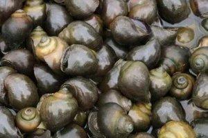 中国十大外来入侵物种,水葫芦仅排第四,第一最为大家所熟知